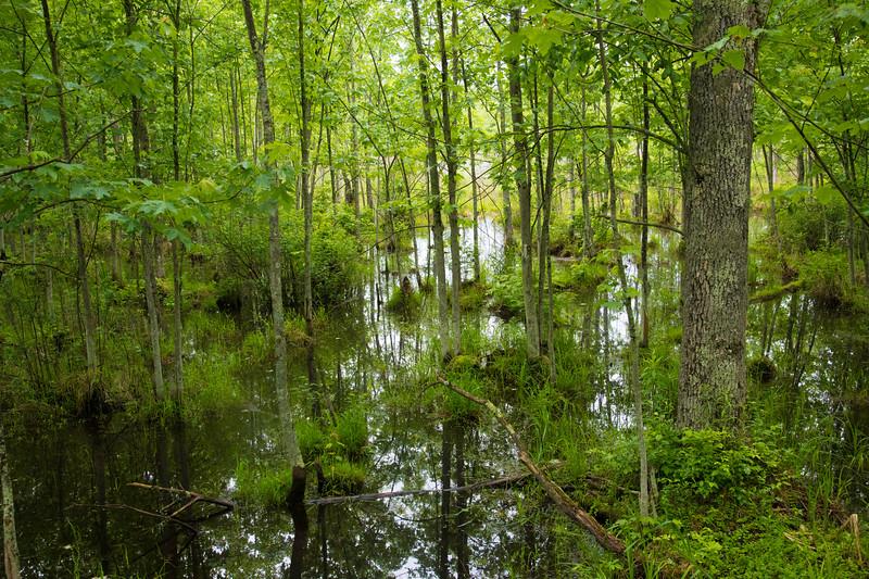 Sapsucker Woods Swamp