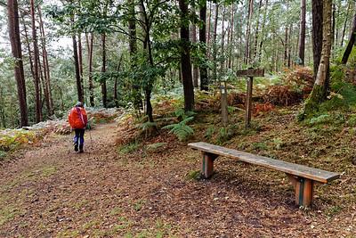 17-09 Bois de Magny, au dessus de la Chapelle St Antoine