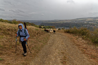 Moutons au Reielsbaum