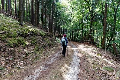 le long de l'Elsterbach