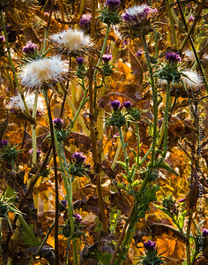 Thistles and Leaves