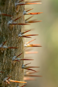 Ouch, Thorns!
