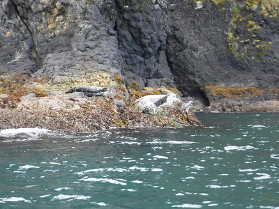 As we went around the point, we came across these seals.  I backed up to give them space and managed to take a photo (with my zoom, hence the blurry) without any of them moving or jumping in the water, which is an obvious sign of disturbance.
