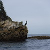 this cormorant was posing just for us