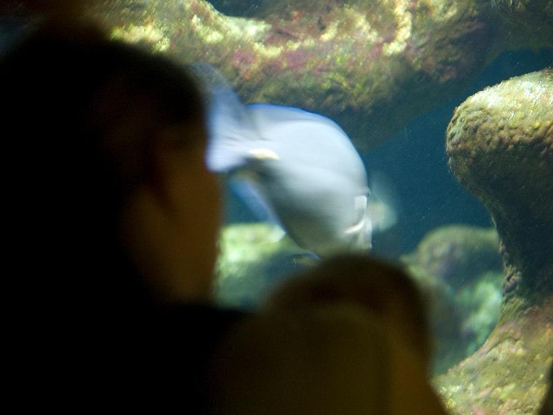 Monday 25th sept 06 - Cai enjoys looking at the fish