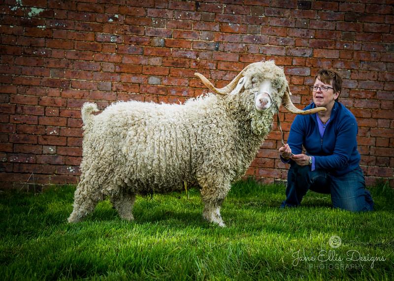 wmk Goat-3244