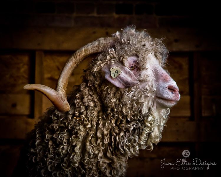 wmk Goat 2-3302