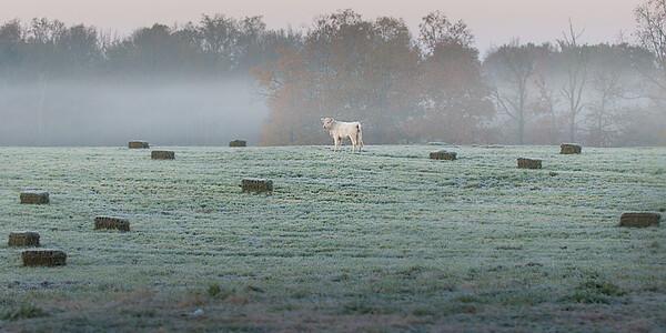 Ivey Farm