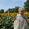Camillus, Ny 08/12/2016. Family and Baby enjoy the Camillus Sunflower maze.