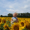 Camillus, Ny 08/12/2016. A child in a sea of sunflowers. At the  Camillus Sunflower maze.