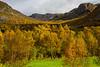 Høst ved Byrkjedal i Gjesdal kommune - nær Byrkjedalstunet