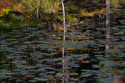 """Thin White Birch"" photo by J jake"