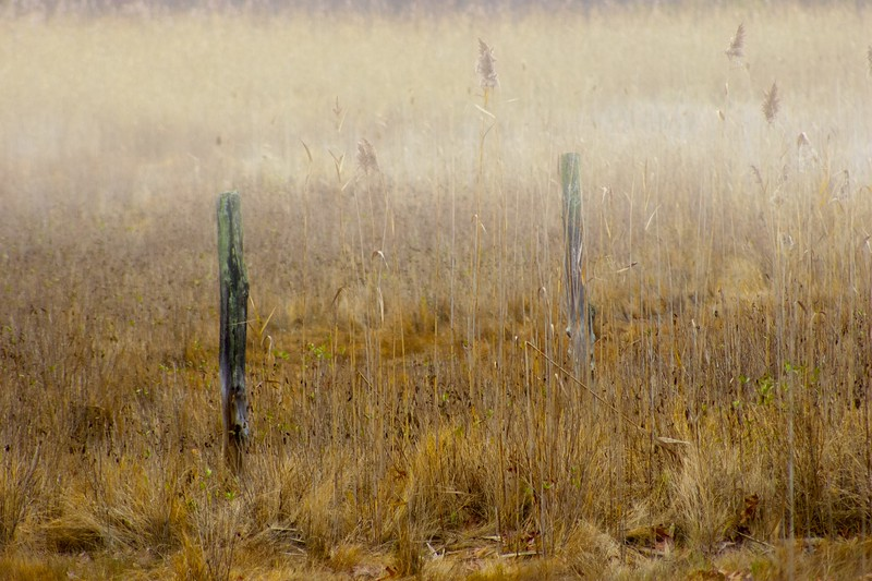 """""""Old Fence Posts"""" photo by J jake"""