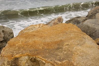 Karen's Sea Turtle