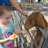 The 26th Johnny Appleseed Festival was held on Saturday, September 21, 2019 in Leominster. Alexa laughner, 5, from   one of the goats at the petting zoo from Johnny's Farmland at the festival. SENTINEL & ENTERPRISE/JOHN LOVE