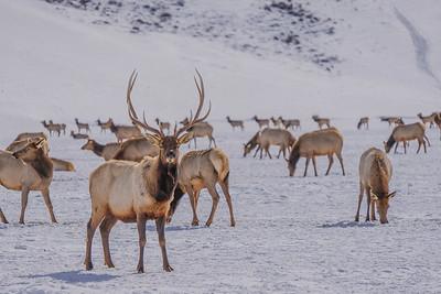 Jackson Hole Wyoming