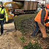 KEVIN HARVISON | Staff photo<br /> A McAlester city crew works to cut down two rolls of hedges on the west side of Chadick Park near the splash pad and Carl Albert statue. The city was back the bushes to clear the sidewalk and promote new growth.