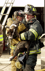 "Mahanoy City firefighter Robert Darker carries an unconscious pit bull named ""Bronx"" out of a home that burned Wednesday afternoon. Firefighters and EMS were able to revive the animal."