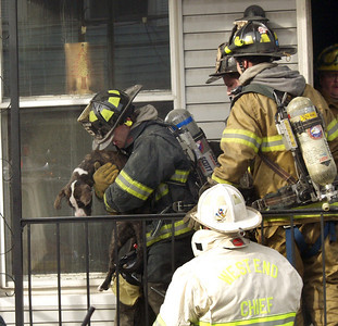 "Mahanoy City firefighters carry an unconscious pit bull named ""Bronx"" out of a burning home Wednesday afternoon. Firefighters and EMS were able to revive the animal."