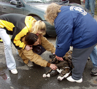 "A pit bull named ""Bronx"" lays unconscious and barely breathing after being overcome by smoke in a fire Wednesday afternoon. Firefighters and EMS crews were able to revive the animal."