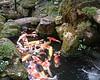 KOÏ<br /> Kyoto 2004 <br /> fuji digital