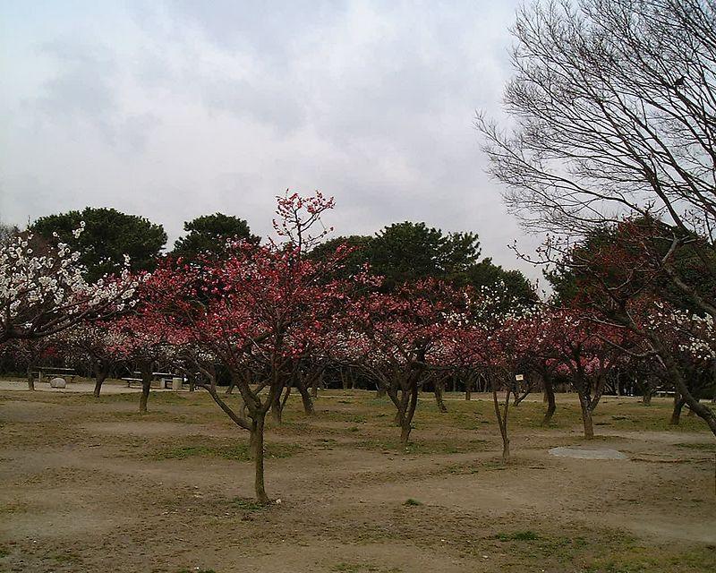 osaka2004