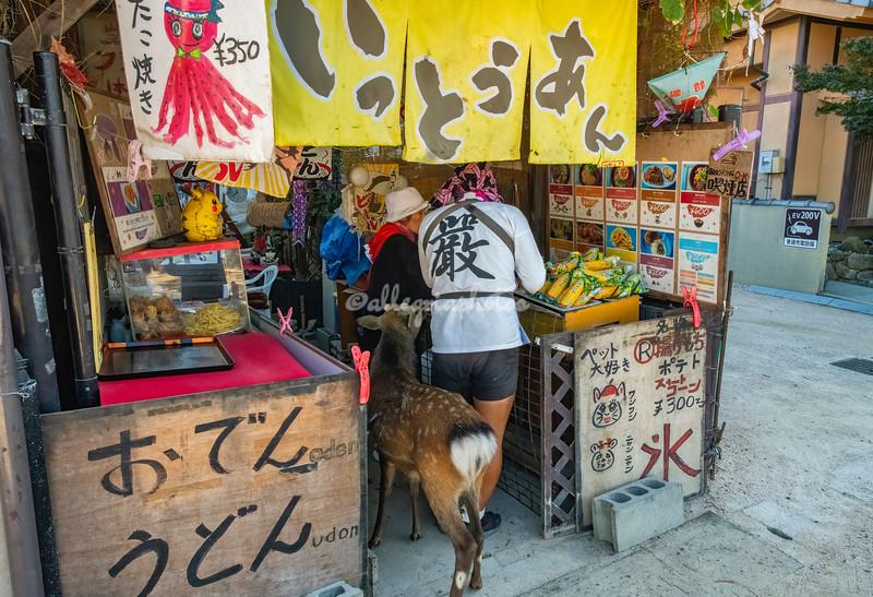 """I'll have the Corn please"",  A Sika deer in a small cafe, Miyajima Island, Hiroshima, Japan"