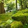 Moss covered rocks, Hasedera Temple, Kamakura, Japan