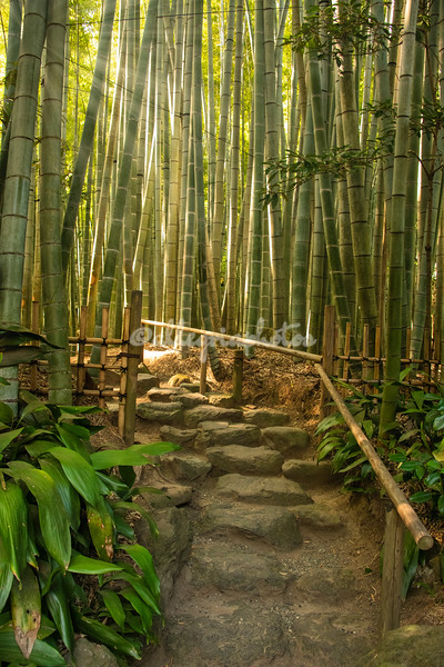 Bamboo forest, Hohokuji Temple, Kamakura
