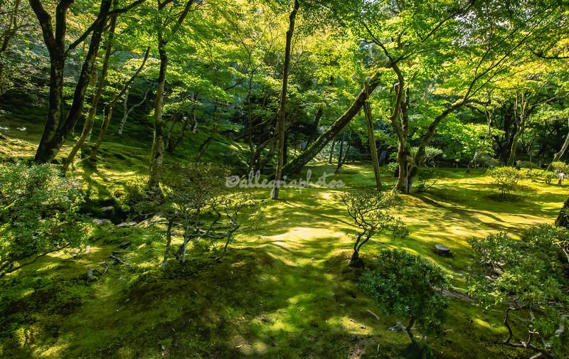 """Mossy Glade"", Ginkaku-ji Temple and Gardens, Kyoto, Japan"