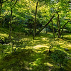 """Mossy Glade"", Ginkaku-ji Temple and Gardens, Kyoto, Japan"
