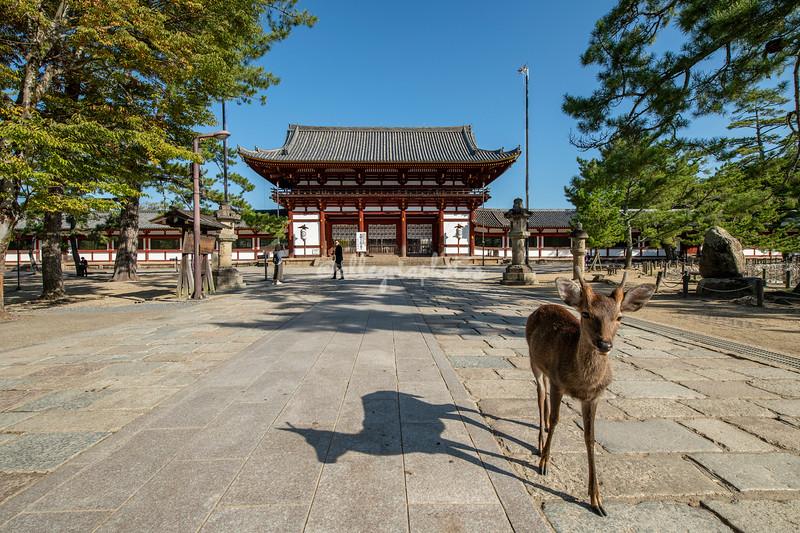Sika deer in front of the Todaiji Temple, Nara, Japan