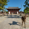 Sika deer in front of the Todaiji Temple, Nara, Japan