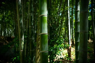 20 Arashiyama Bamboo forest © David Bickerstaff