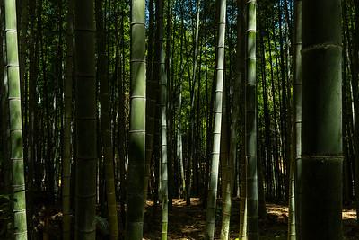 22 Arashiyama Bamboo forest © David Bickerstaff