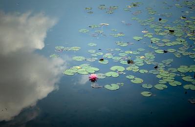 06 Filming Keitakuen Gardens Osaka © David Bickerstaff