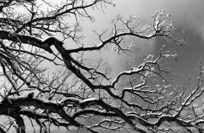 015-winterscape-wdsm-26feb07-bw-0580