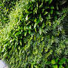 Green wall.  This wall filters the collected gray water.