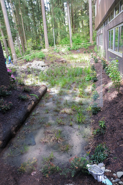Another view of a rain garden outside of building.  Note the use of an untreated log to hold back soil. Walkway in background is used by students to go out and observe nature.