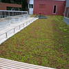 Green roof.  Additional planters installed for students use