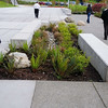 Mini rain garden to manage some of the water off the non-permeable surface (lighter color concrete on the left).  The gray concrete on the right is permeable and lets rain water soak through to the ground underneath.