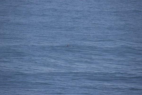JAWS MAUI 25 Feburary 2016 XXL AZHIAZIAM Chuck Patterson, Yuri Solidadand Trevor Carlson