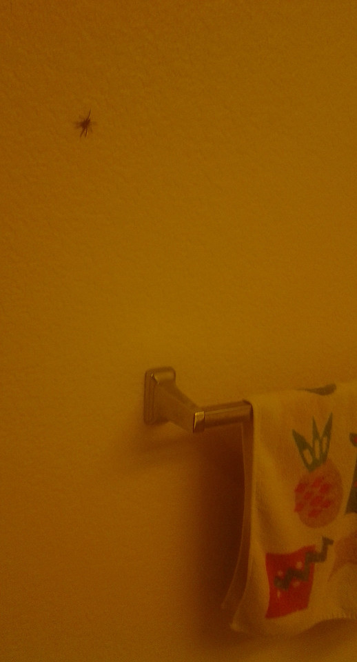 05/31/2014 - big spider in my bathroom