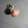 06/08/11 - I saw this outside Intel museum. What is this?<br /> Ans: Snail on a reflective glass window. Thanks for all the response.