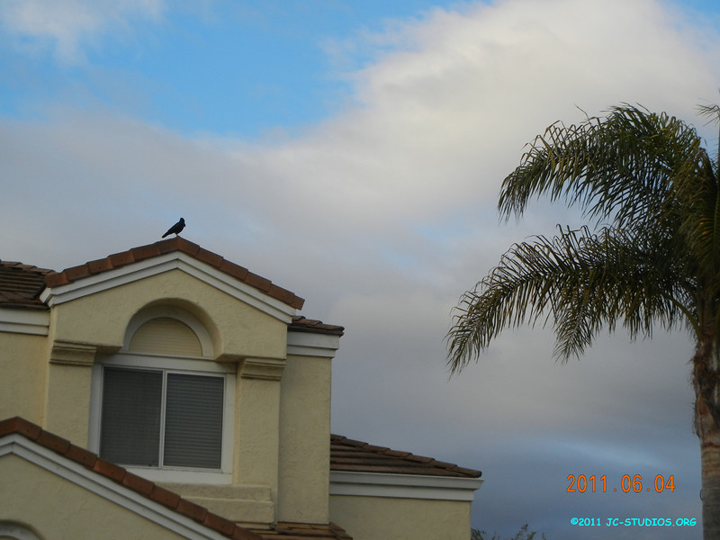 06/04/11 - I am at the top.... I found this crow during my evening walk and it stays at a good position with the house and the tree.