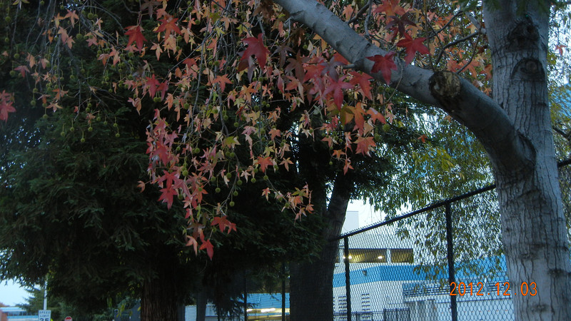 12/03/2012 - Still got some fall leaves after the rain storm.