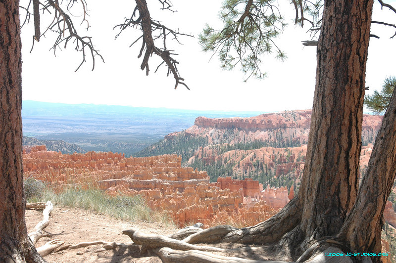 Pink and Red Hoodoos, Rim Trail, Bryce Canyon National Park, UT