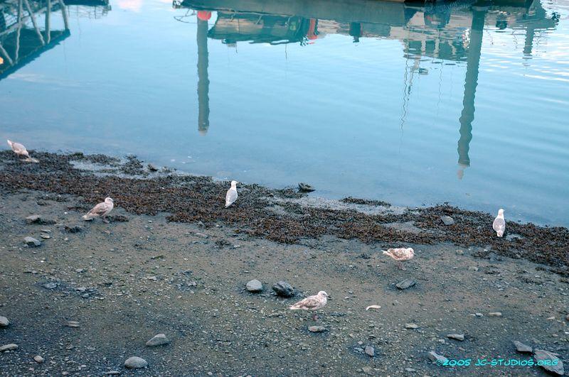 Marina at Kenai, AK