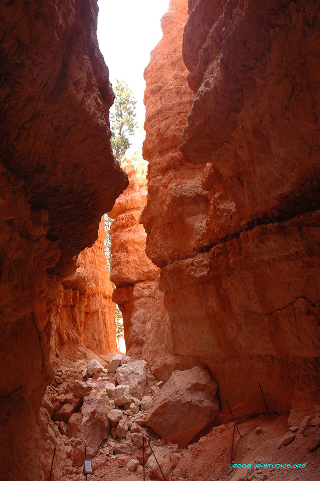 Rock Slide at the bottom of Wall Street, Navajo Loop Trail, Bryce Canyon National Park, UT