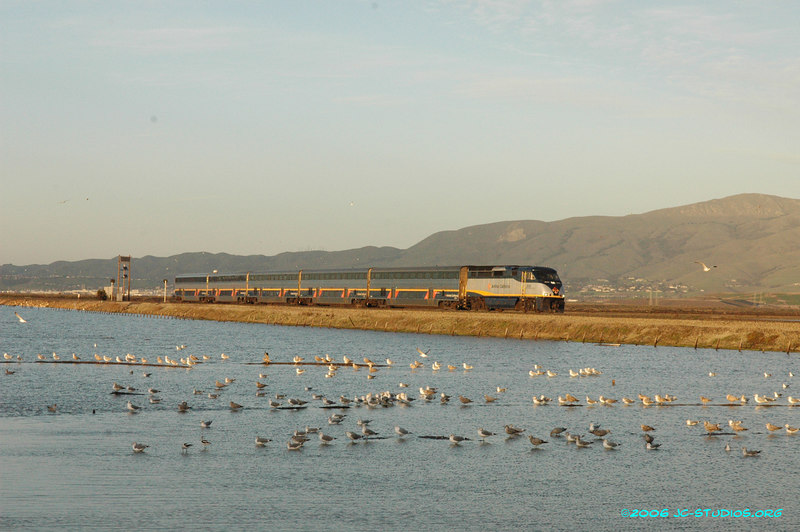 Amtrak and Seagulls at Dusk, Don Edwards Wildlife Refuge, Alviso, CA